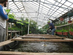 Aquaponics setup at Growing Power